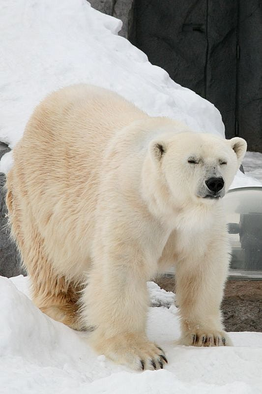 Asahiyama zoo  JAPAN WEB MAGAZINE