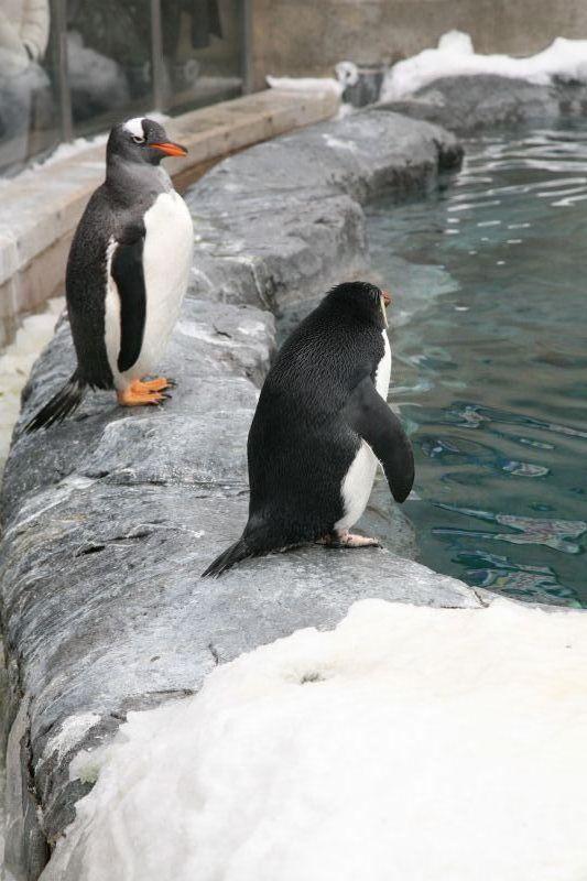 Asahiyama Zoo, Hokkaido