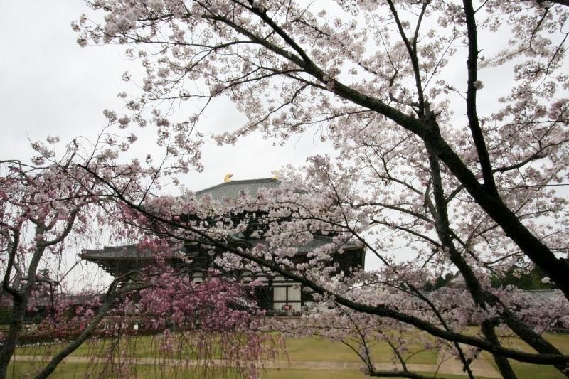 Japan nara todai ji temple7