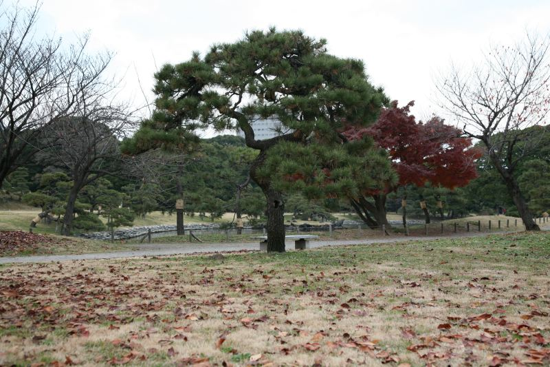 Hamarikyu Gardens  JAPAN WEB MAGAZINE