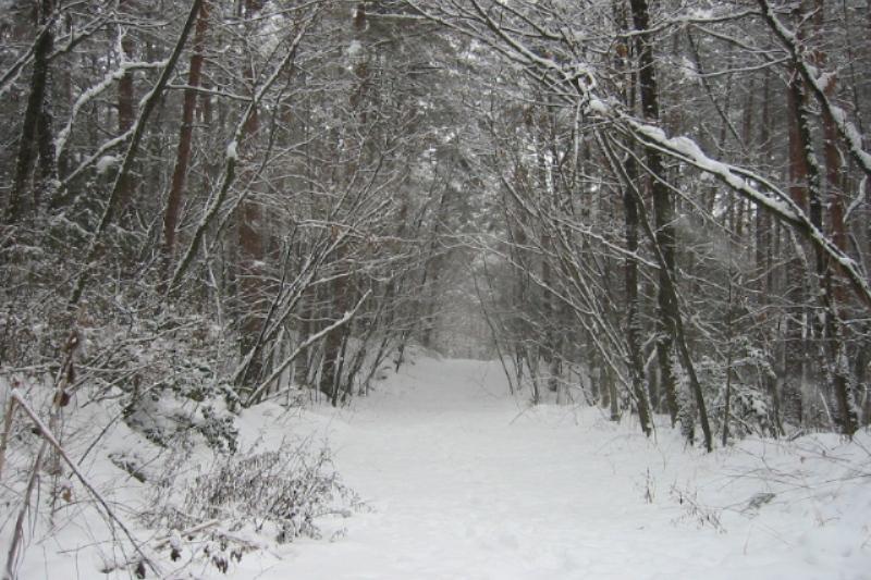 日本の冬の風景