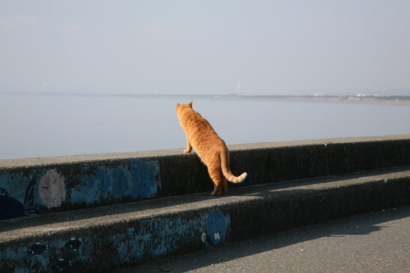 Landscapes with cats