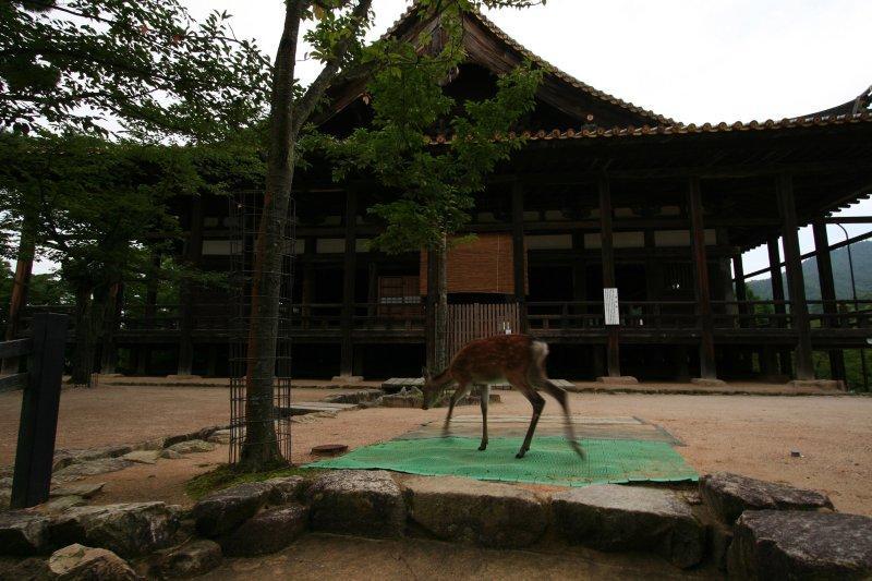 Hokoku Jinja