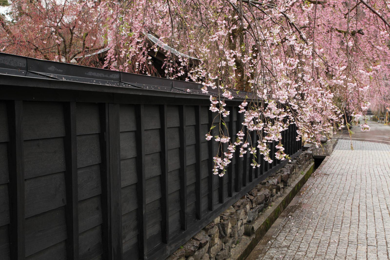 角館武家屋敷と桜   JAPAN WEB MAGAZINE