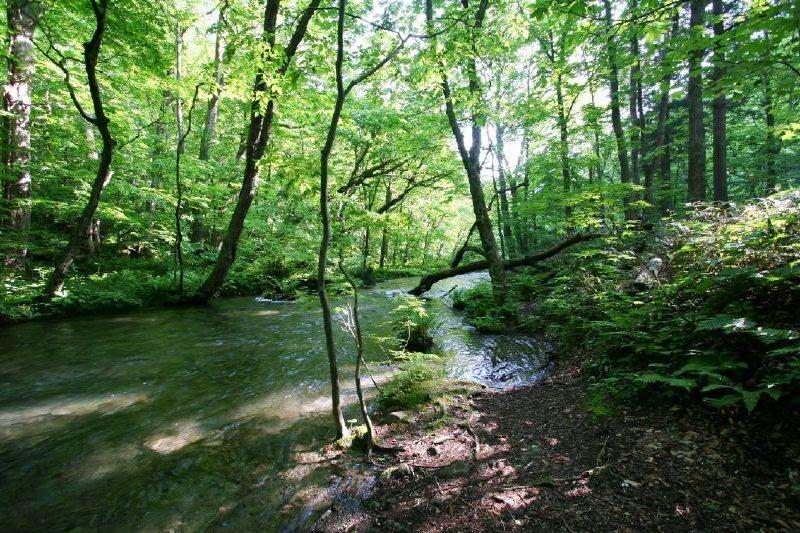 Oirase stream