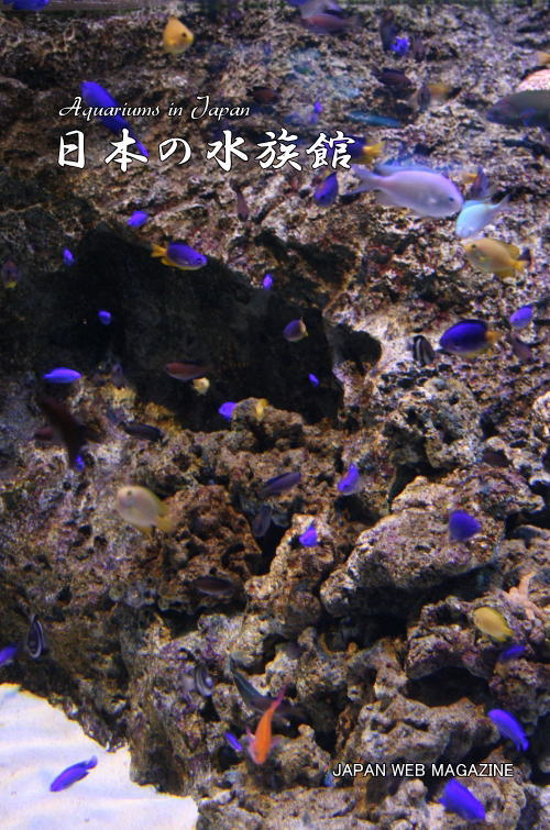 日本の水族館