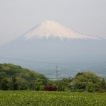 富士山を見る(麓から)