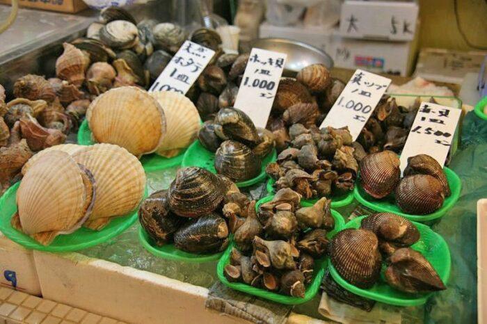 北海道の貝類