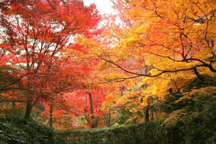 嵯峨野・嵐山