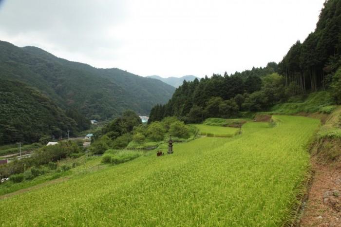 上稲子の棚田