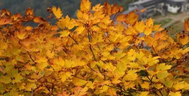 谷川岳 天神平の紅葉
