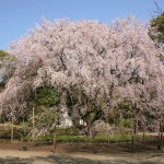 春の六義園