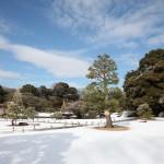 東京雪景色