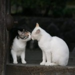 ネコの居る風景ぱーとII