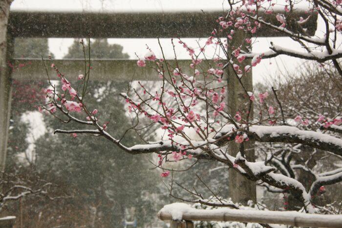 梅と雪 上野五條天神