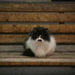 名寄のひげ猫