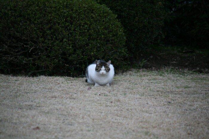 身延山久遠寺の猫