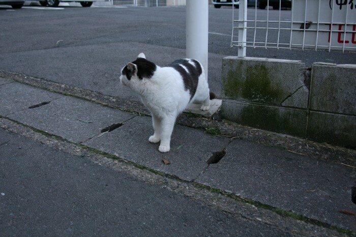 竹の寺の前の猫