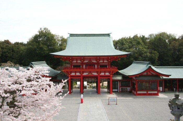 近江神宮と桜