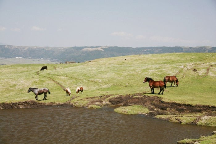 馬のいる風景 阿蘇 草千里