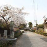 豊前国分寺と桜