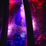 横浜・八景島シーパラダイス 華麗なるイワシ一族の神秘 5万尾のイワシたちが魅せる新たな海のドラマ 「サーディンラン」