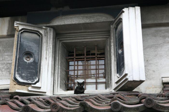会津若松 蔵窓の猫