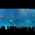 沖縄美ら海水族館 「黒潮の海」水槽