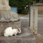 大光院の猫