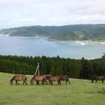 都井岬の野生の馬たち