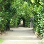 備瀬のフクギ並木