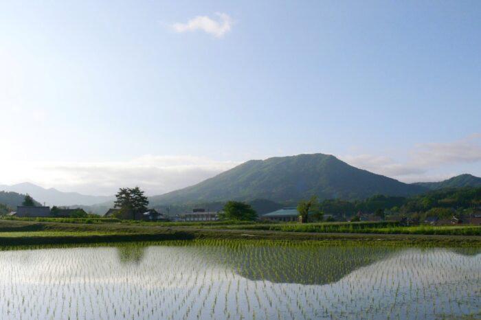 田植後の田んぼに映る春の寒曳山