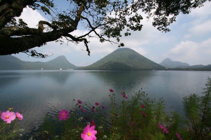 榛名湖とコスモス