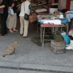或る日の久礼大正町市場と一匹の猫