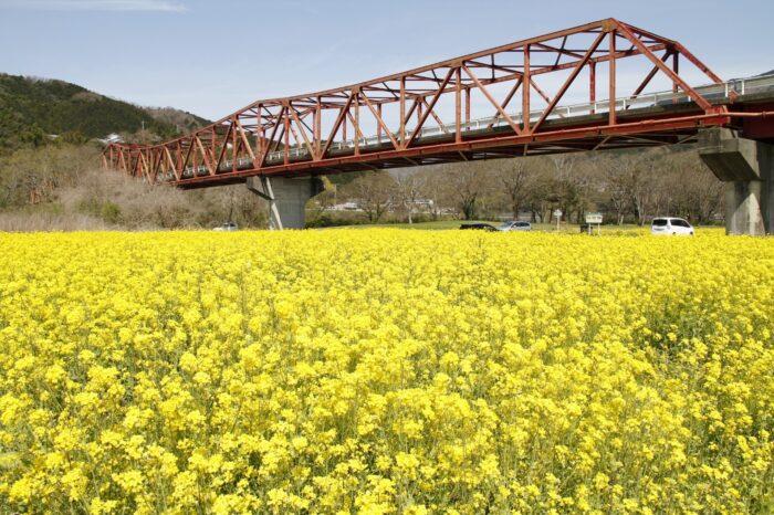 大洲の菜の花畑に「春」を探しに行こう