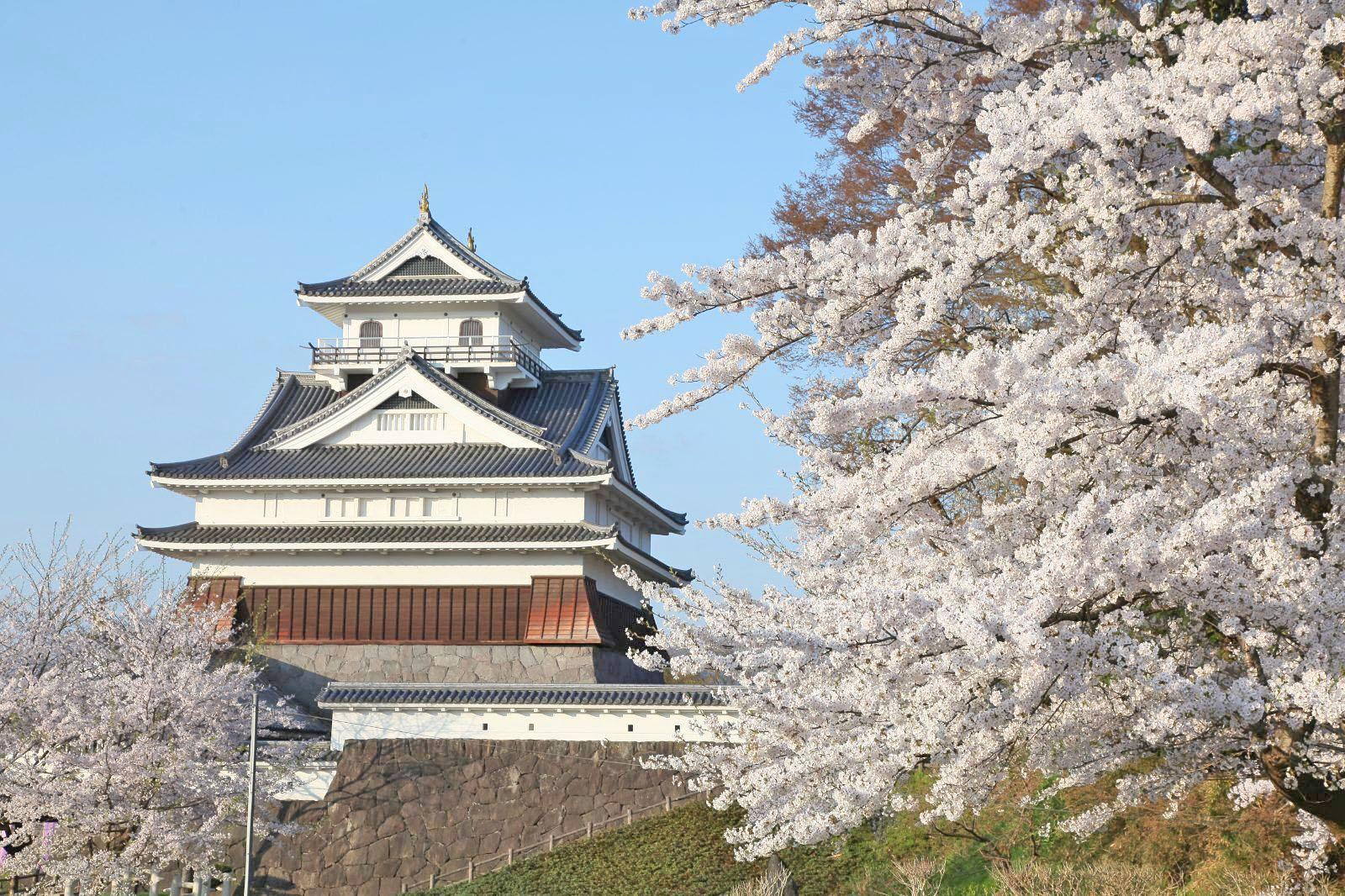 上山城と桜