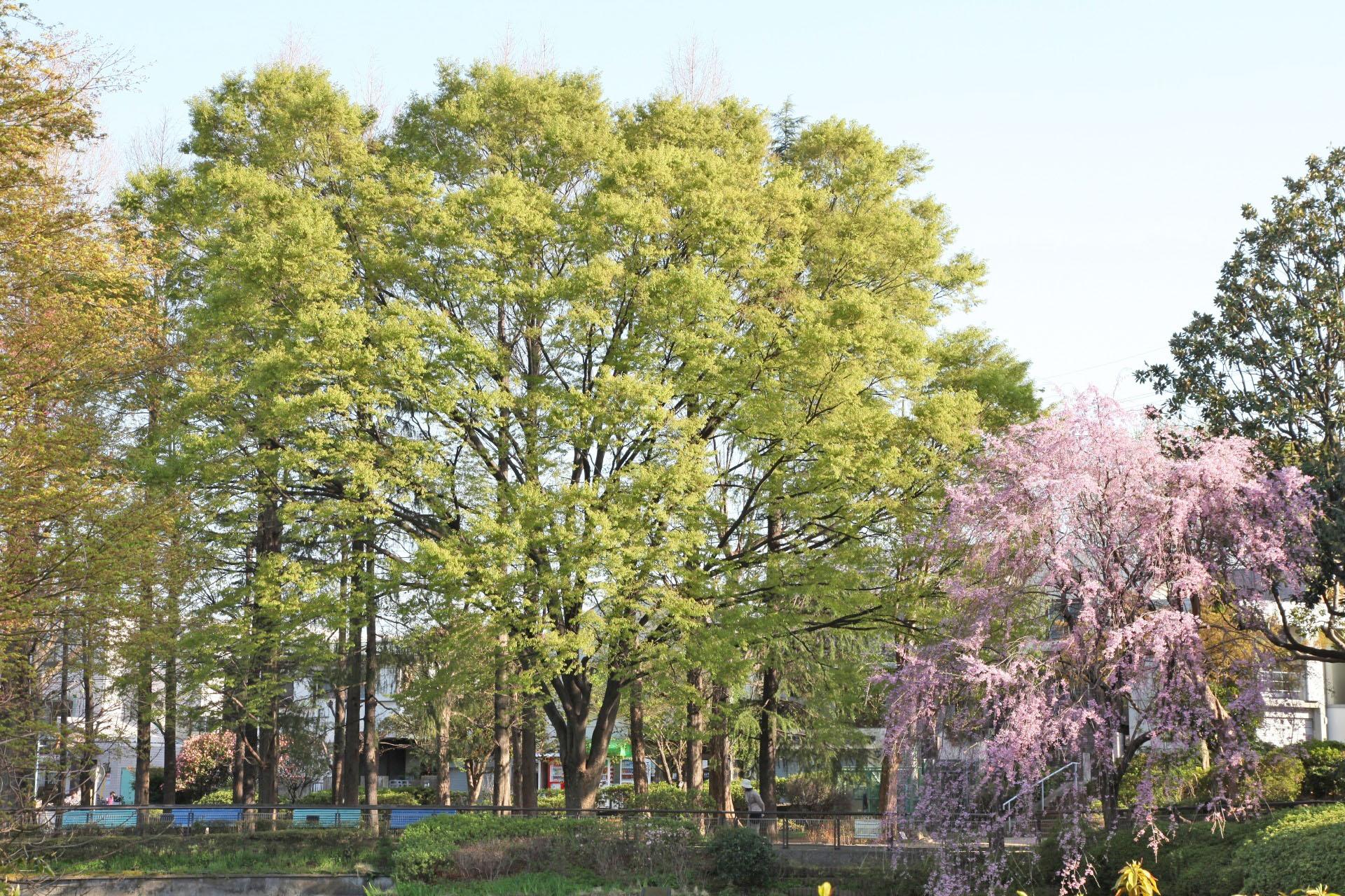妙正寺公園