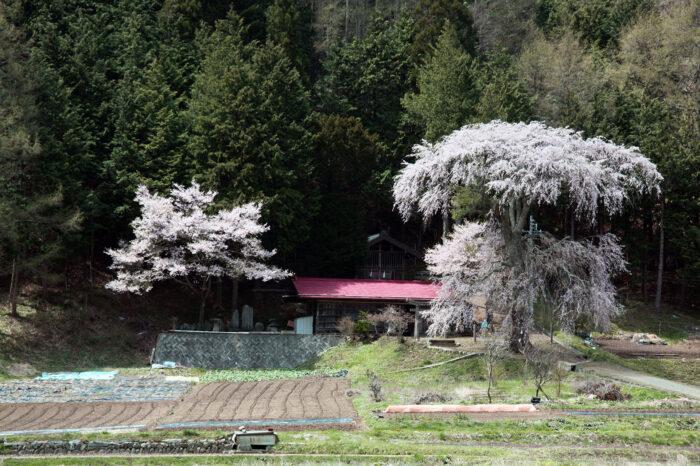 美しい里山の風景を探して 長野県伊那市高遠の春の風景