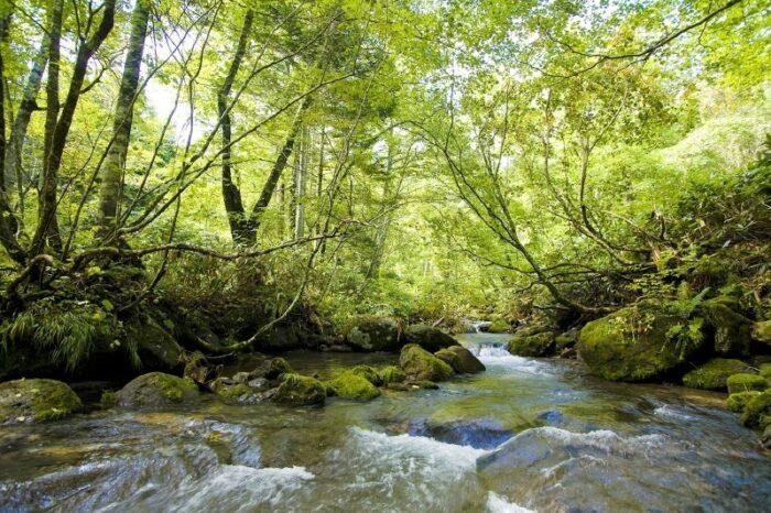千歳川の風景