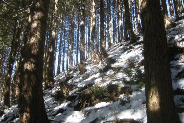 日本各地の冬の風景「奥多摩」