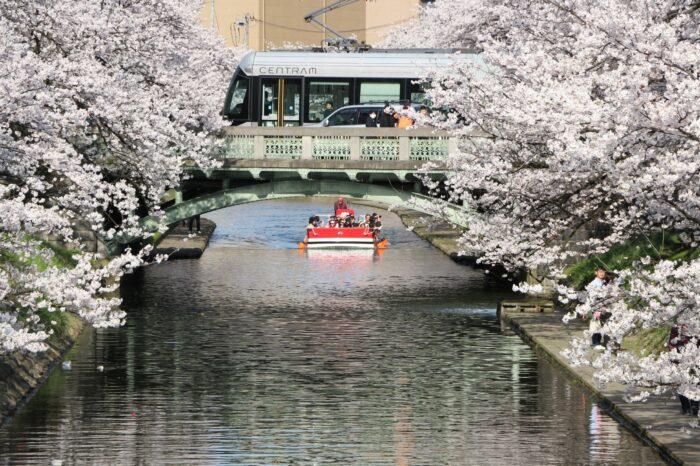 春の松川遊覧船