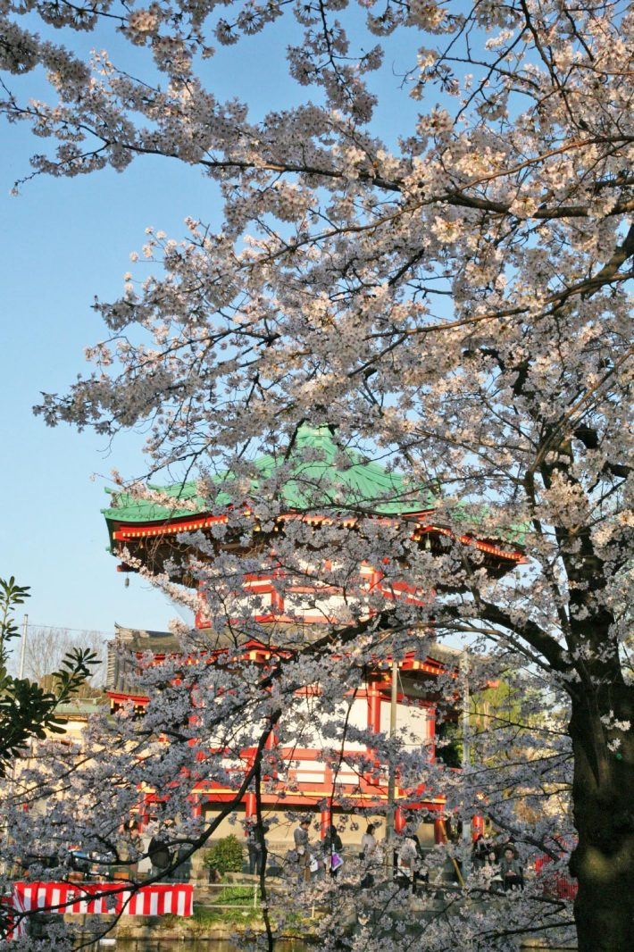 桜と不忍池弁天堂