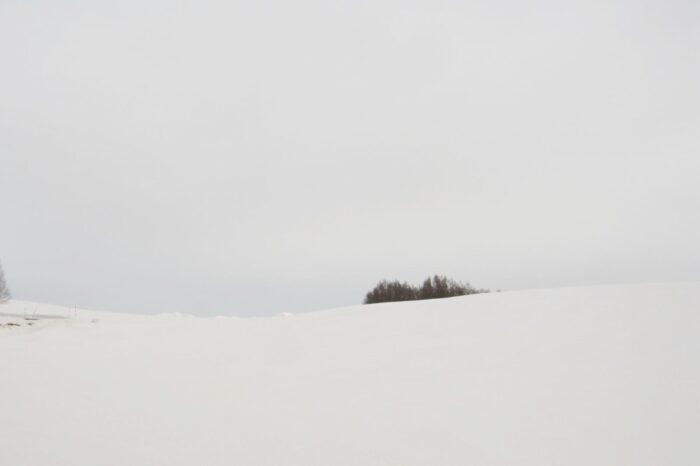 美瑛の風景