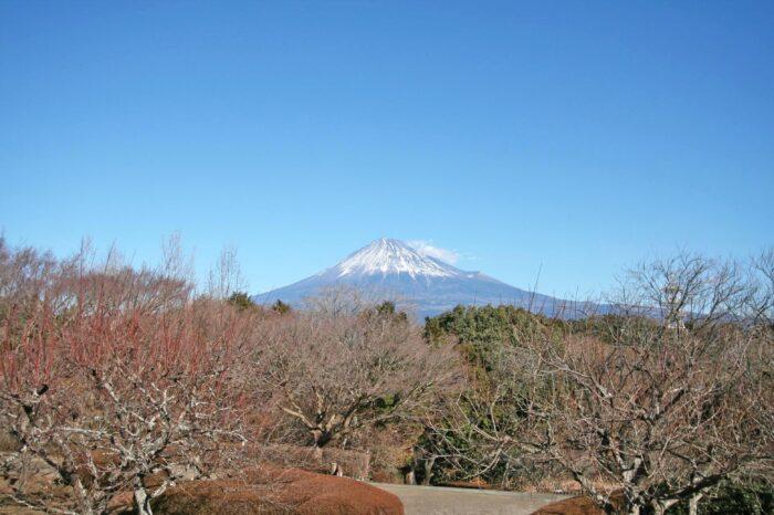 岩本山公園から見る富士山