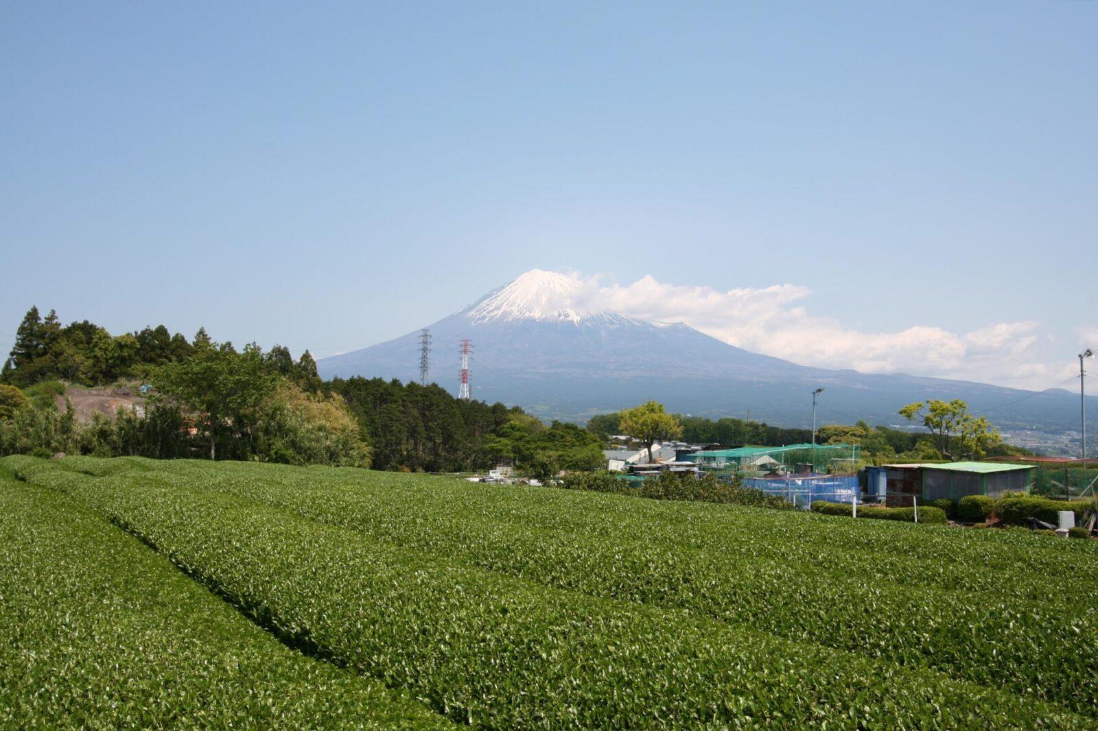 茶畑と初夏の富士山