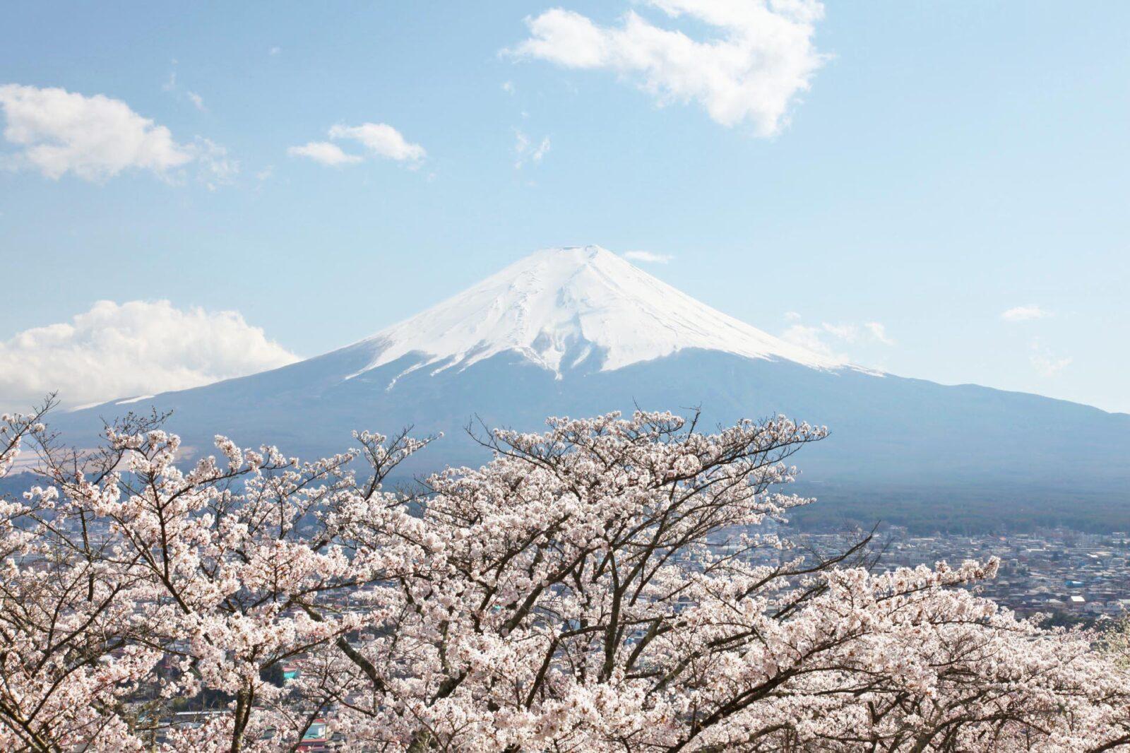 桜と富士山 春の富士山