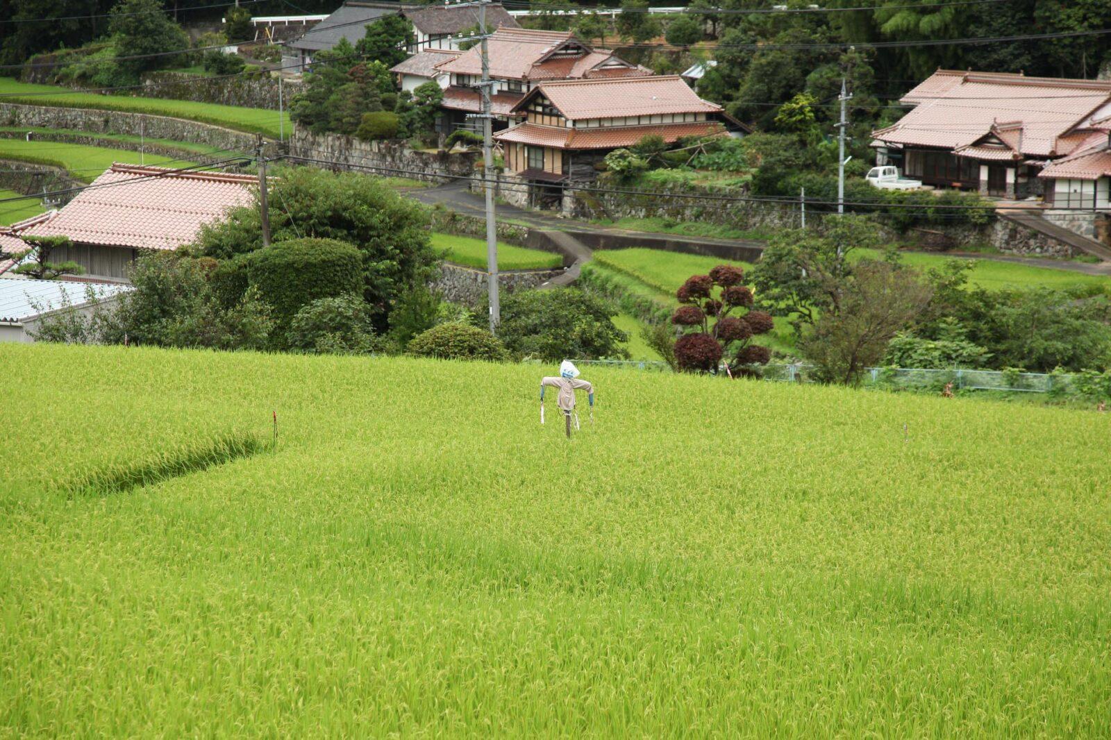 日本の夏の里山の風景 広島県広島市安佐北区